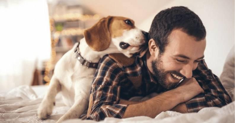 Airbnb para mascotas