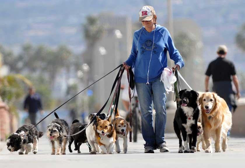 Negocio paseador de perros